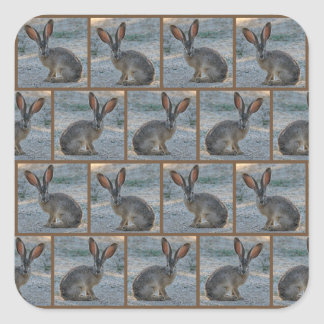 Black tailed jackrabbit square sticker