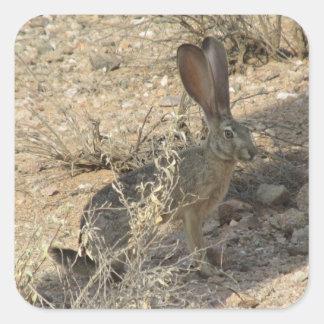 Black-tailed Jackrabbit Square Sticker