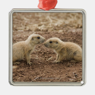 Black Tailed Prarie Marmot Christmas Ornament