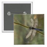 Black-tailed Skimmer 15 Cm Square Badge