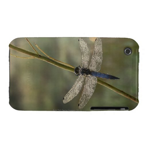 Black-tailed Skimmer Case-Mate iPhone 3 Case