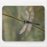 Black-tailed Skimmer Mouse Pad