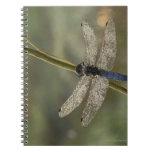 Black-tailed Skimmer Note Books
