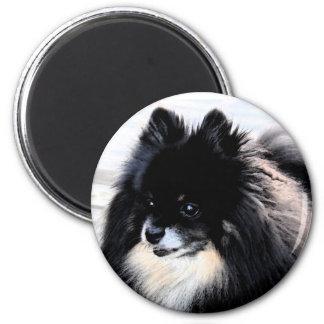 Black & Tan Pomeranian Magnet