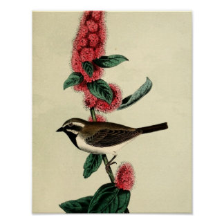 Black Throated Finch Poster