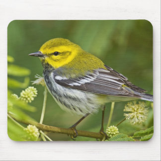 Black-throated Green Warbler Dendroica Mouse Mat