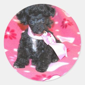 Black Toy Poodle Puppy on Pink Round Sticker