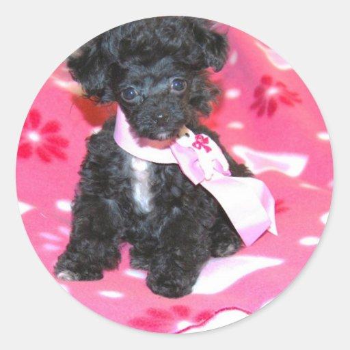 Black Toy Poodle Puppy on Pink Sticker