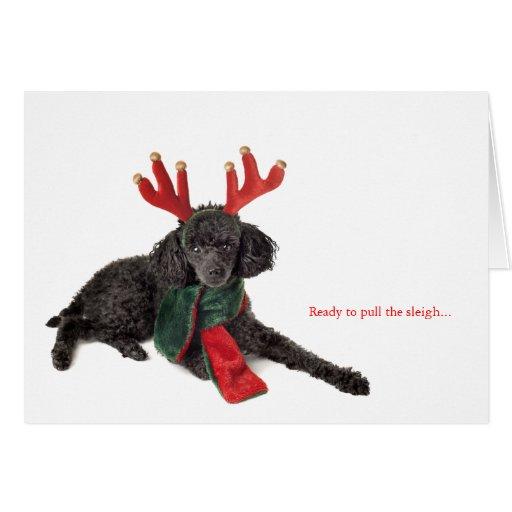 Black toy poodle with reindeer antlers greeting cards
