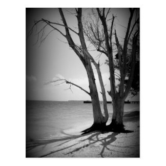 Black Tree by the Sea Postcard