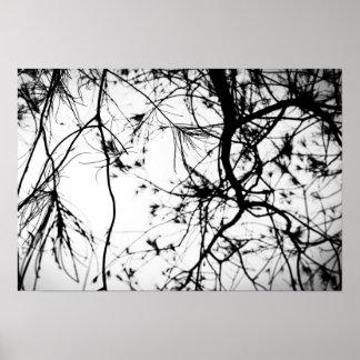 Black Tree Silhouette Poster