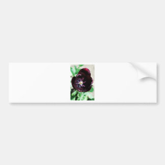 Black tulip macro bumper sticker