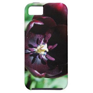Black tulip macro iPhone 5 cover