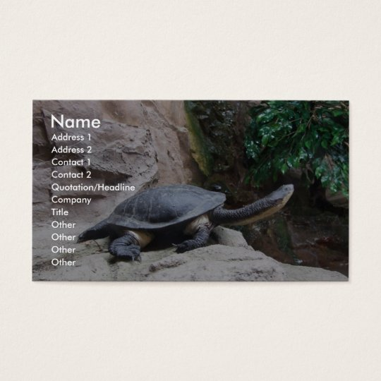 Black Turtle With Long Neck On The Rocks Business Card