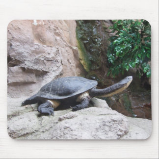 Black Turtle With Long Neck On The Rocks Mousepads
