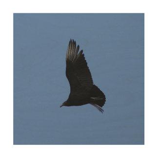 Black Vulture, Wood Art Photo Print. Wood Print