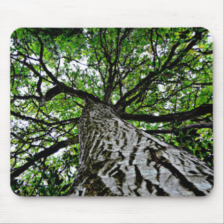 Black Walnut Trunk and Branches Mouse Pad