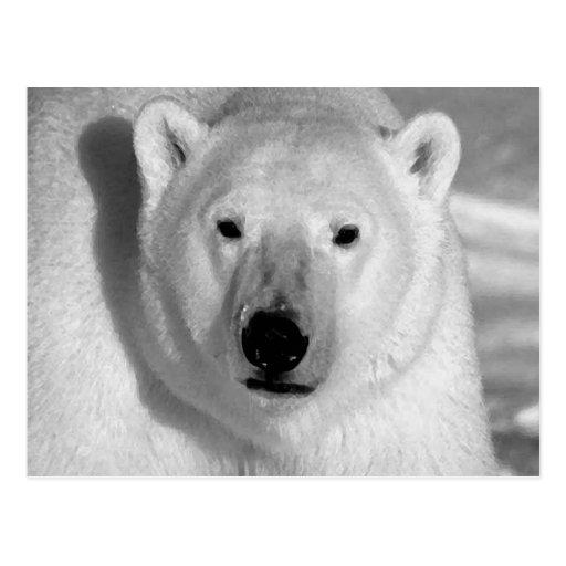 Black & Whit Polar Bear Postcard