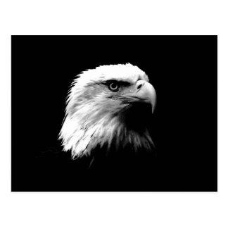 Black & White Bald Eagle Postcard