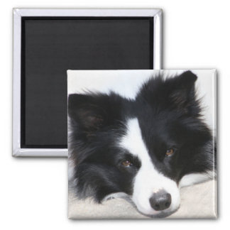 Black & White Border Collie Puppy Dog Magnet