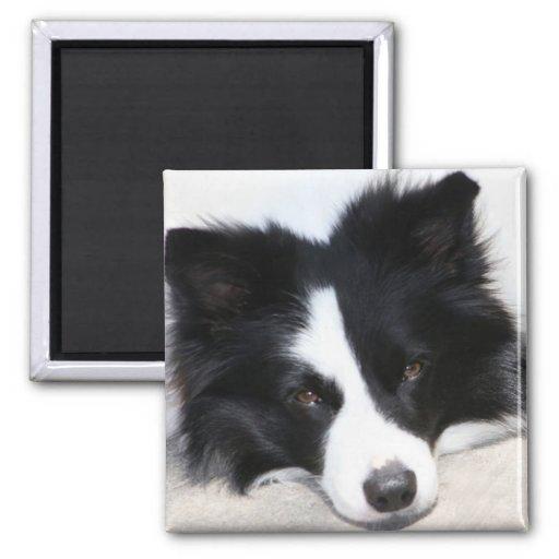 Black & White Border Collie Puppy Dog Magnet
