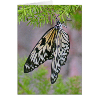 BLACK &WHITE BUTTERFLY ON PLANT NOTE CARD