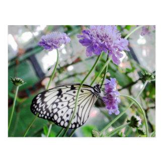 Black White Butterfly Postcard