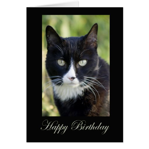 Black & White Cat, blank birthday card