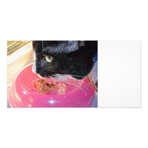 black white cat head pink bowl sparkle animal pet photo card