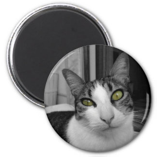 Black White Cat Photo 6 Cm Round Magnet