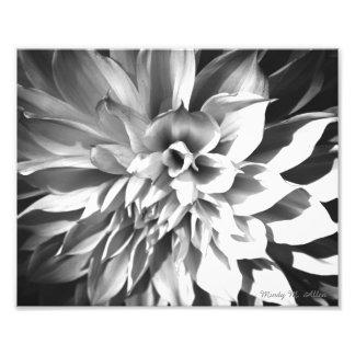 Black & White Chrysanthemum Print 8 x 10