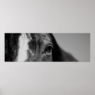 Black & White Close-up Horse Eye Poster