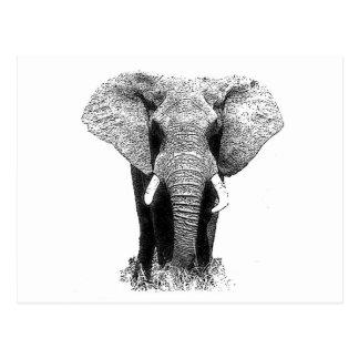 Black & White Elephant Postcard