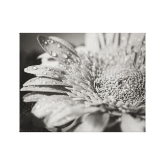 Black & White Flower & Droplets Canvas Print