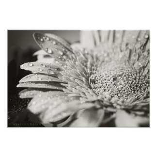 Black & White Flower & Droplets Photo Print