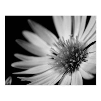 Black White Flower Postcards