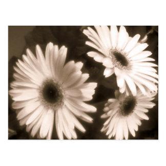 black white flower postcard