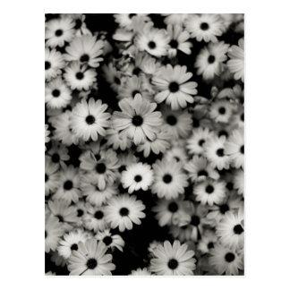 Black & White Flowers Postcard