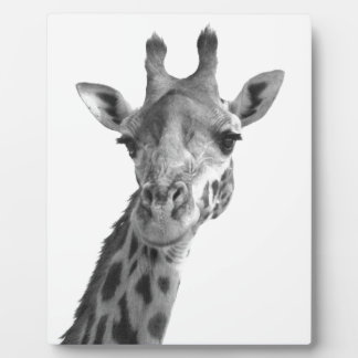 Black & White Giraffe Plaque