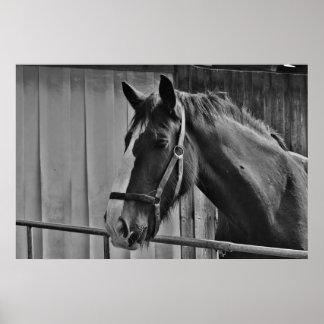 Black White Horse - Animal Photography Art Poster