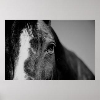 Black White Horse Eye Artwork Poster