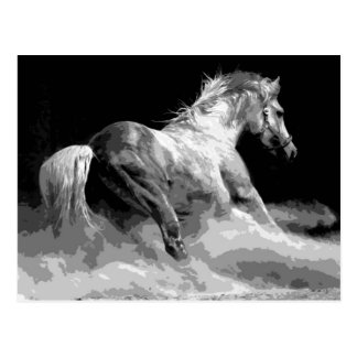 Black & White Horse in Action Postcard