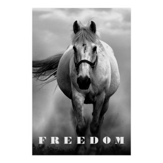 Black White Horse Motivational Freedom Artwork Poster