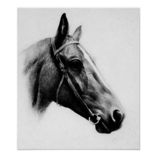 Black White Horse Pencil Drawing Artwork Poster