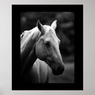 Black White Horse Portrait Poster