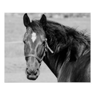Black White Horse Poster