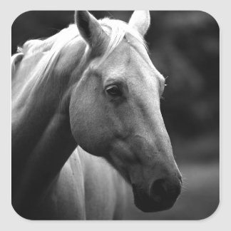 Black White Horse Square Sticker