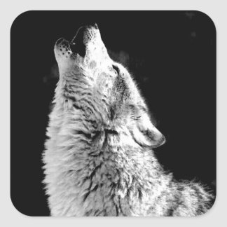 Black & White Howling Wolf Square Sticker
