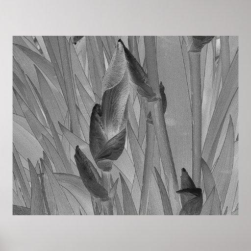 Black White Iris Flowers Original Art Poster