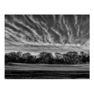 Black & White Landscape Central Park Photo Postcard
